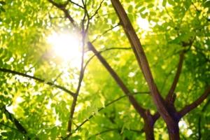 tree and shrub fertilization